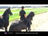 Le Cheval Roi : Un salon pour les passionés de chevaux