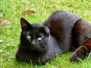 Sound of black cats - Malicia Darkwave