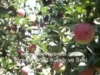 Geyve Yöresi Elma Bahçeleri Elma Toplama