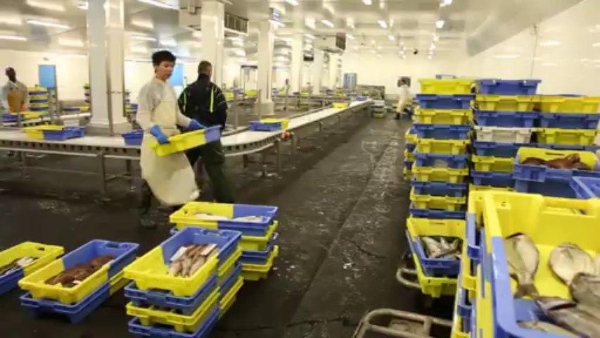 La criée de Lorient, tout pour valoriser le poisson