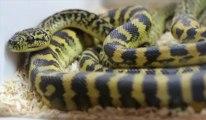 Salon d'Escaudoeuvres : serpents, caméléons, les nouveaux animaux de compagnie