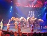 Le cirque Gruss à Dunkerque : le numéro des éléphants