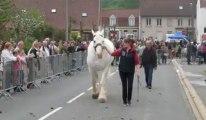 Pernes : concours de chevaux boulonnais lors de la foire