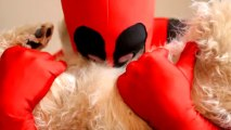 CHIEN TROP MIGNON !!!!! DEADPOOL FAN FILM !!!!!!!!! CUTE DOG !!!!! kawai dog !!!!!!!!! TEASER N° 2