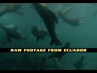 Underwater RAW Footage from Ecuador