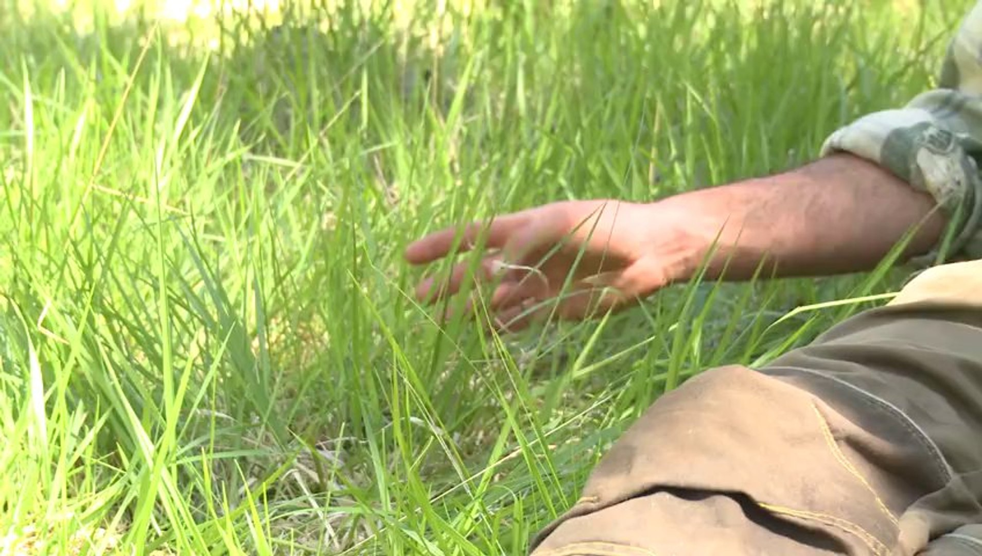 Bergers de l'Aigoual, éleveurs des  causses et cévennes, Teaser