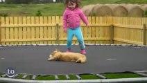 Des animaux s'amusent sur un Trampoline - Compilation de chiens, chat, chèvres... Trop mignon!