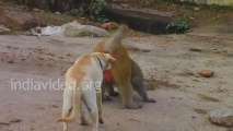 Dog and Monkey - Funny video