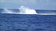 le saut de la baleine à bosse