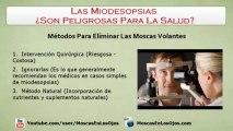 Las Miodesopsias Son Peligrosas?: Son Realmente Peligrosas Para La Salud, Las Miodesopsias?