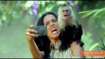 PETA Calls Katy Perry's 'Roar' Music Video Cruel to Animals