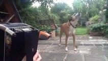 Jessie le chien chante quand son maître joue de l'accordéon. Trop marrant.