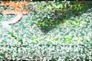 HD SPY PEN CAMERA IN KAROL BAGH, HD PENCAMERAINKAROL BAGH, 09650321315