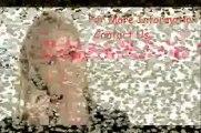 SPY PEN CAMERA IN KAROL BAGH, PENCAMERAINKAROL BAGH, 09650321315