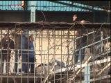 Şişecam işçileri fabrikanın çatısına çıktı