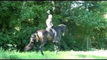 Sueno et Olivier (pas espagnol, piaffer, passage, changement de pied, appuyers, équitation ibérique...)
