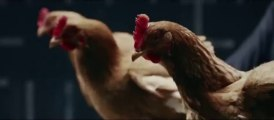 New Mercedes-Benz TV commercial ads with Chickens... So so funny!!