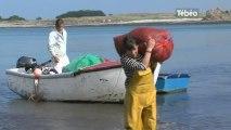 La pioca, une algue qui fait vivre une economie (Fnistère)