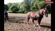 Plounéour-Menez (29). Labour à cheval à l'abbaye du Relec