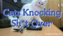 Cats Being Jerks & Throwing Things Down Compilation