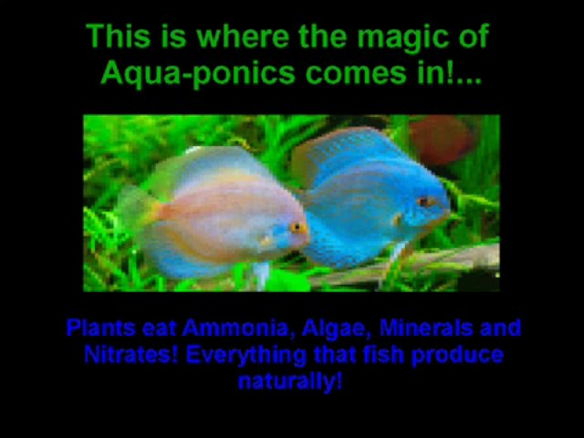 Aquaponics 4 You Review Real Benefits of Aquaponis 4 Organic System!!