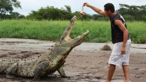Crocodile Feeding Time: Tour Guides Come Within Inches Of Deadly Crocodiles