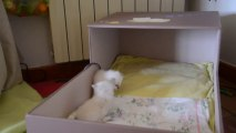 Jeux chatons 3 bis (26/09/13)
