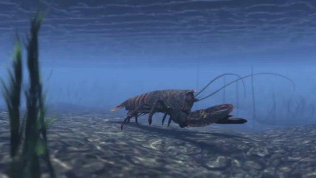 Aaron Nosan, Lobsters Life