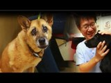 Australian diplomat sues Taiwanese vet for not euthanizing his dog