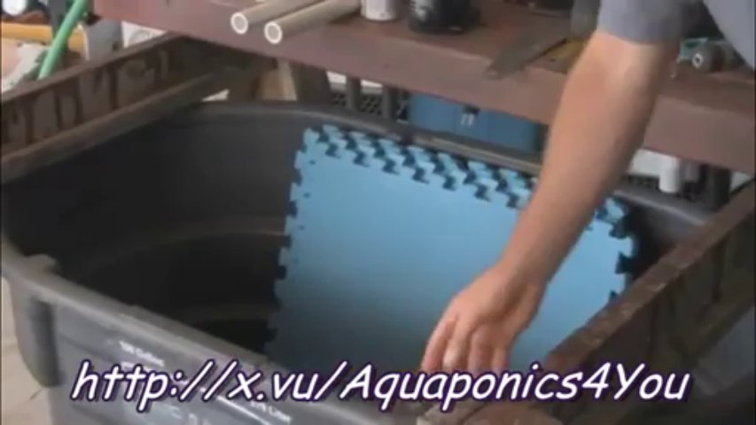 Aquaponics 4 You Learn How to Grow 10 Times the Plants in Less Time