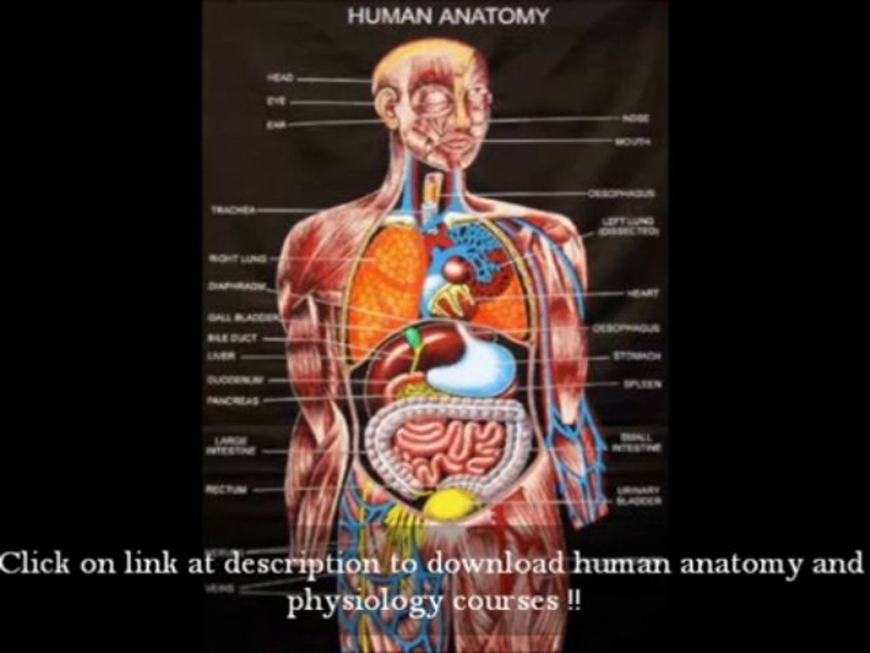 download human anatomy