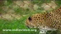 Gangtok Himalayan Zoological Park India