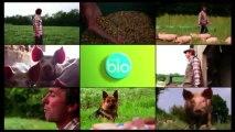 La Minute BIO - porcs bio, à la découverte d'un élevage exemplaire