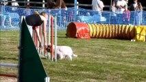 jumping agility elfie