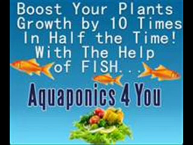 Aquaponics 4 You Review:  Just watch plants grow fast with Aquaponics 4 You