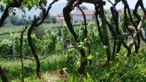 De bodega en bodega con el pase del vino | Euromaxx