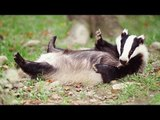 Badger discovers medieval pagan warriors in underground tomb