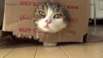 Les chats et les boîtes en carton... trop drôle!!