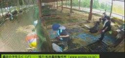 20130915 敷き藁交換