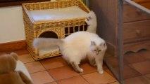 Jeux chatons 14 (04/10/13) maisonnette