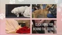 Amazing Pets Videos   Dawson The Cutest Bichon Frise Dog Ever Gets A Bath   2013