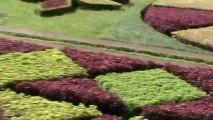 Madeira Jardim Botanico da Madeira Botanischer Garten (5)