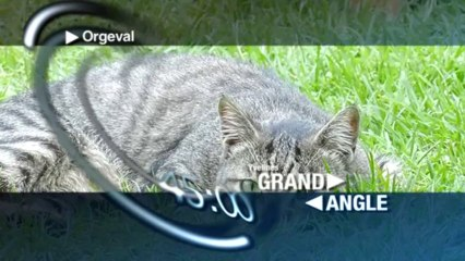 Grand Angle - Lundi 7 octobre