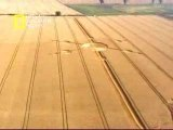Crops circles in Inghilterra 6
