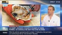 Cuisinez-moi: la pêche à la saint-jacques en Normandie - 13/10