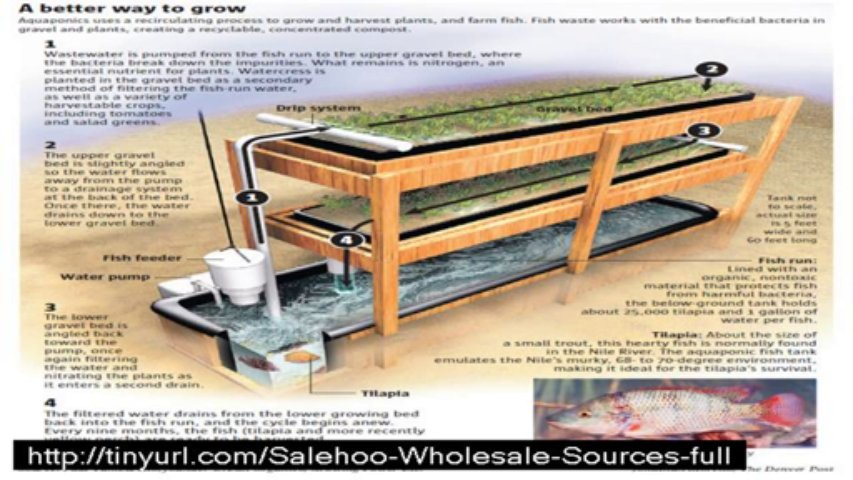 easy diy aquaponics  does is relly work ?