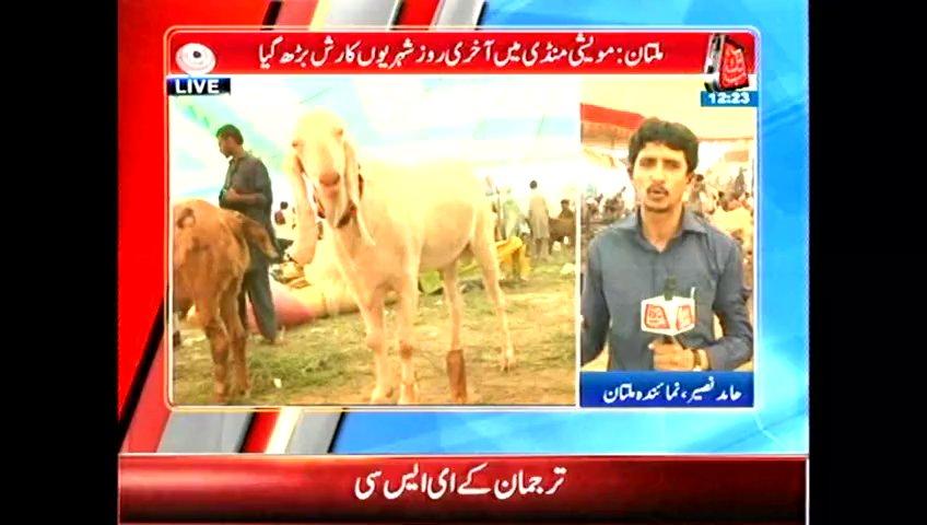 Multan cattle market