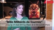 """L'exposition """"Mille Milliards de fourmis"""" en trois questions"""