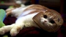 Après Jésus sur des toast, voici des têtes de chat sur des tartines... Trop marrant.