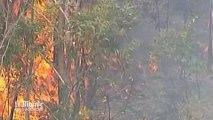 En Australie, les incendies ravagent toujours la région de Sydney